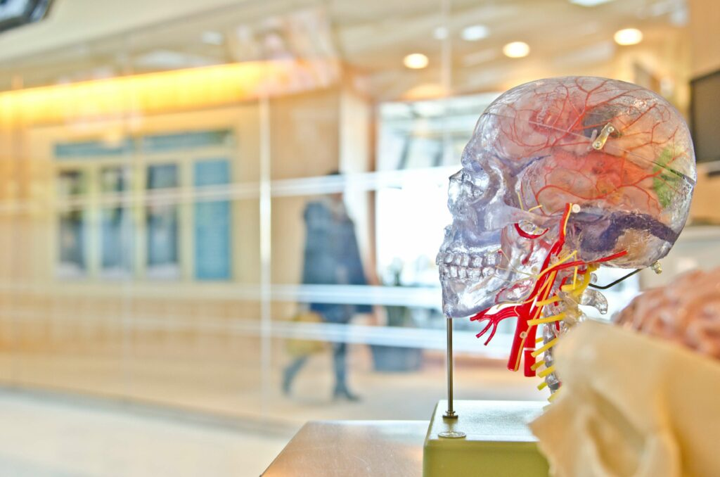 Neuroplasticity and movement: a transparent skull model.
